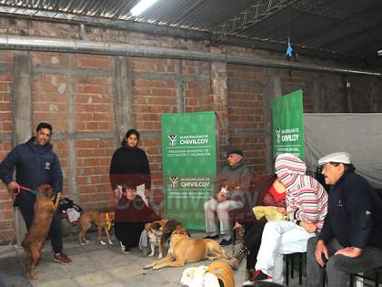 Castraciones de perros y gatos en la Sociedad de Fomento Barrio Sur