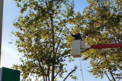 Obras Públicas:   Se realizarán trabajos de poda correctiva en la Plaza Principal