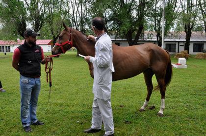 Comenzaron a dar turnos para la identificación de equinos