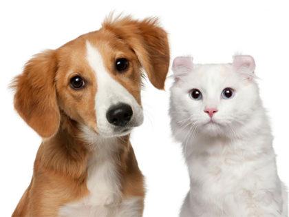 Colegio de Veterinarios: Tenencia Responsable. Alergias en perros y gatos