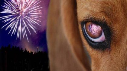 Colegio de Veterinarios: Recomendaciones para cuidar a nuestras mascotas
