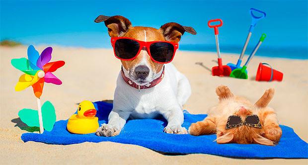 Bienestar animal: Calor, animales, fiestas   De Chivilcoy
